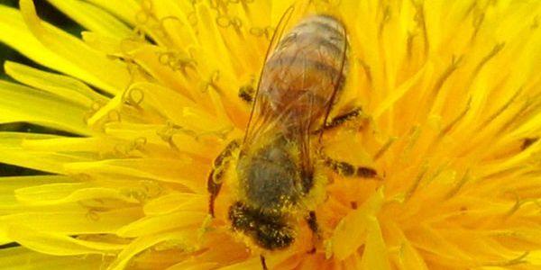Bude svet bez včiel?