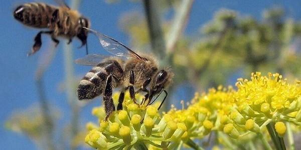Včely budú po roku 2013 zrejme zo strany EÚ podporované viac