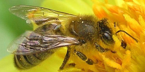 Včely, malý zázrak prírody