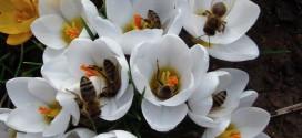 Cenník včelstiev