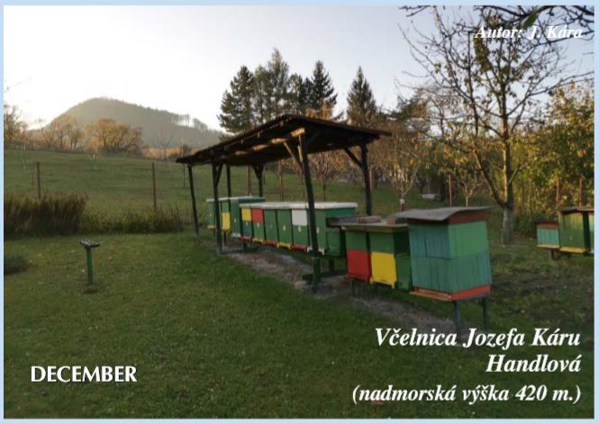 Včelnica mesiaca – December 2019